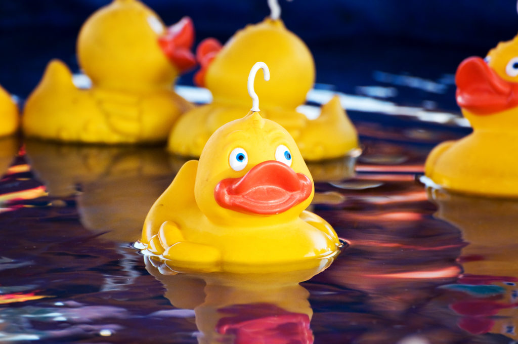 Floating Yellow plastic ducks game at fairground